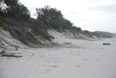 Dune erosion prior to beach scraping