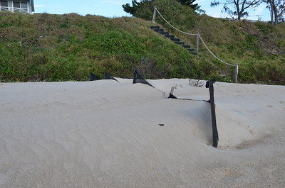 Wooli beach sand fence after one year