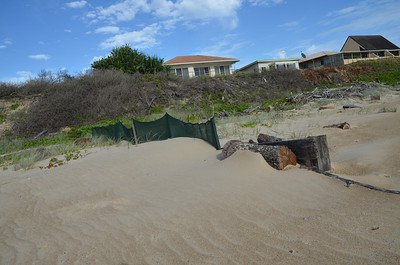 Sand fence constructed late 2011 showing sand buildup